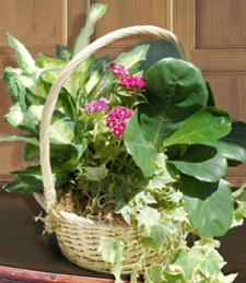 Flowers by Theme - Garden Basket